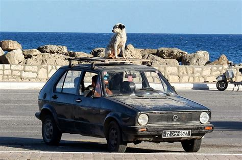 how many sets of do puppies get on a car roof how many sets of teeth do dogs get the flickr