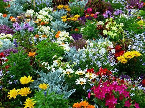 flower garden flowers  photo  pixabay