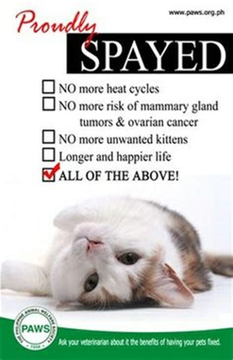 benefits of spaying a 1000 images about spay and neuter caigns on beat the heat free cat