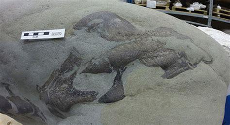 Find Alberta Alberta Fishermen Find Dinosaur Fossil In Castle River Canada Journal