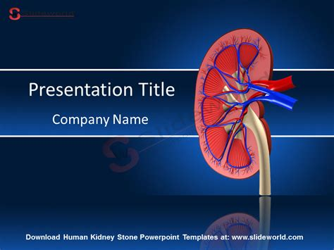 disease powerpoint template disease powerpoint template enaction info