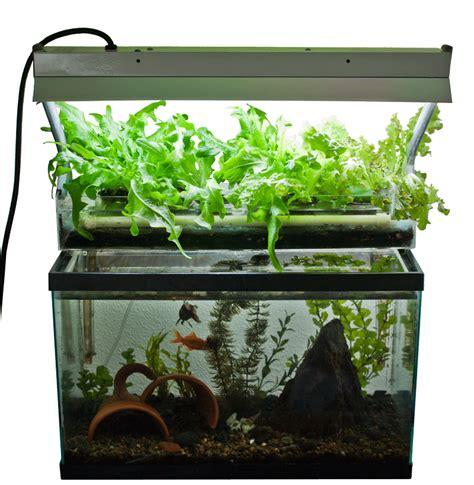 home aquaponics aquaponics home new gardening concepts from