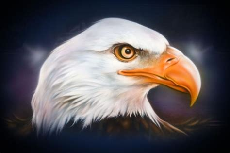 spray paint eagle motorcycle wildlife airbrush artist bald eagle bevin