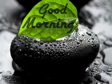 Best Images of Gud Morning, Good Morning Photos   Festival