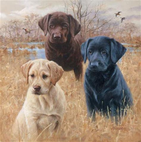 Labrador Retriever Artwork by Labrador Retriever Gifts Labrador Art Prints Posters