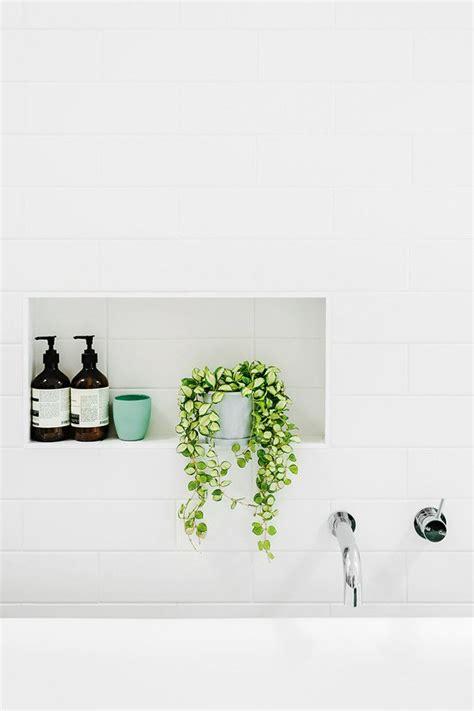 piante per bagno piante da bagno come sceglierle in base all esigenza