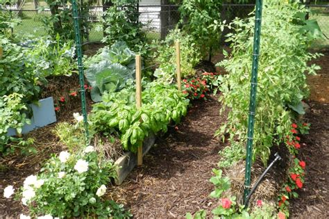 the backyard gardener the benefits of straw bale gardening garden culture magazine