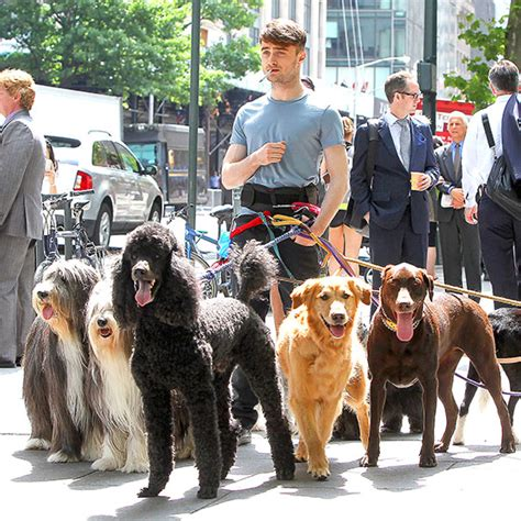 daniel radcliffe dogs daniel radcliffe is a day afternoon on the set of his newest qlty