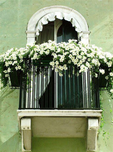 balcony window boxes white petunias on the balcony pretty gardening window