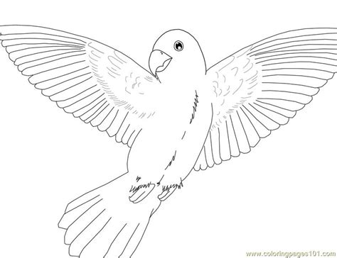 macaw bird coloring page coloring pages parrot birds gt parrots free printable