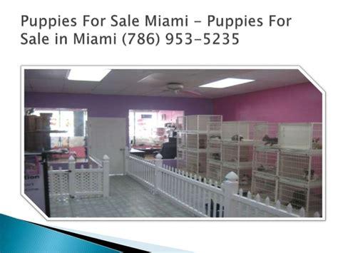 puppy for sale miami puppies for sale miami fl puppies for sale in miami 786 953 5235