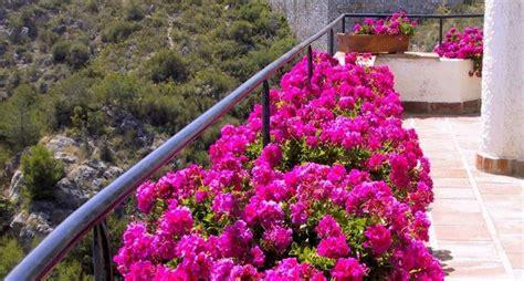 fiori per terrazzo fiori per balconi piante da terrazzo fiori per balconi