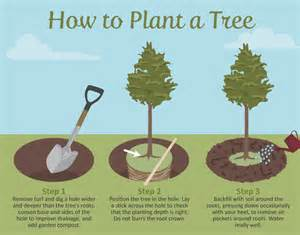 selecting the right tree for your garden fix com
