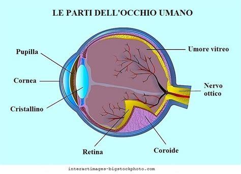 varicella interna sintomi occhio secco sintomi marginale lenti a contatto ormoni