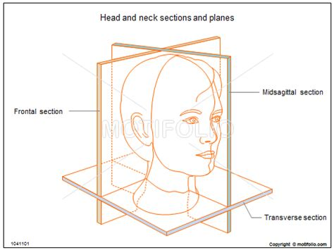 where is the head section of my website head and neck sections and planes illustrations