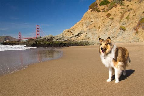 puppy socials san francisco 43 000 petitioning against leash laws in san francisco does new policy go far