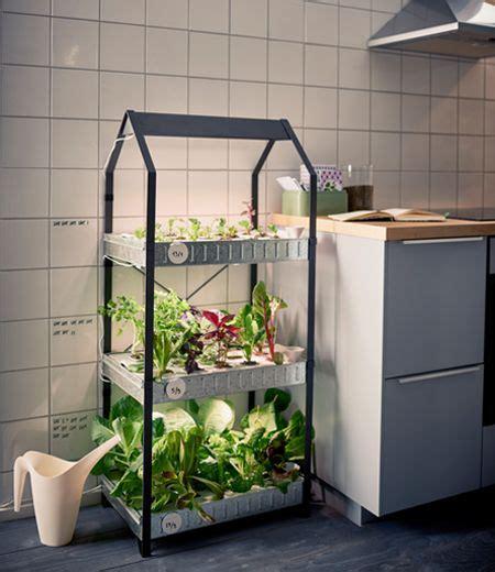 groenten en kruiden kweken hydrocultuur tuinieren