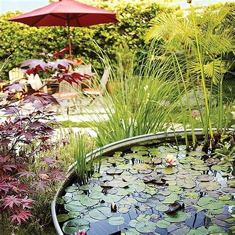 Backyard Ventures Our Next Backyard Venture A Water Garden Starts Today