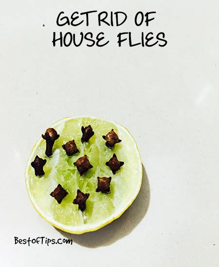remedies to get rid of house flies bestoftips
