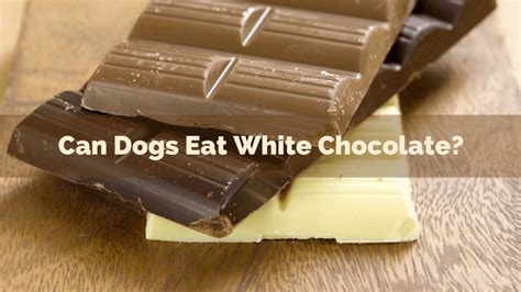 can dogs eat white chocolate what happens if a eats white chocolate thin