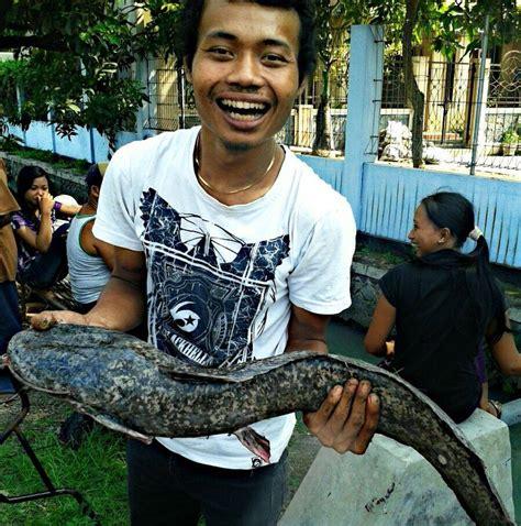 Bibit Lele Sangkuriang Wonogiri jual ikan nila lele mujair home