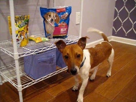 puppy haul puppy haul petsmart and target