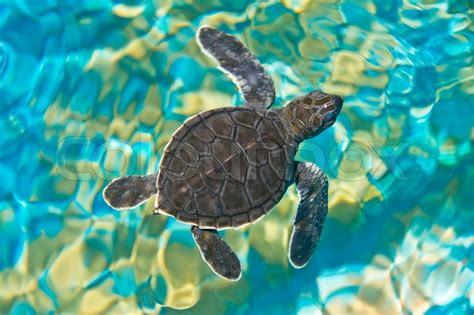 Turtle Top sea turtle top view www pixshark images galleries