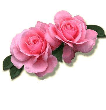 imagenes de rosas solas ciganos encantados wladimir e rosa madalena mais um par