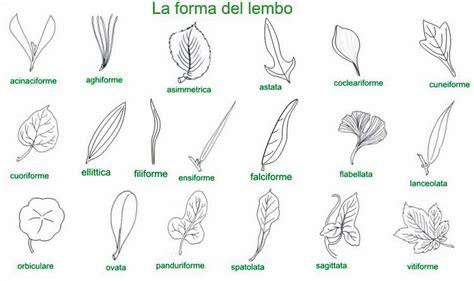 doodle significato italiano in seconda con cip 236 la foglia