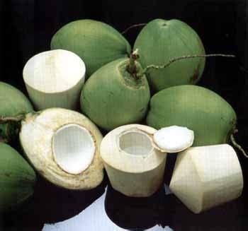 rusa awet muda  langsing berkat air kelapa muda