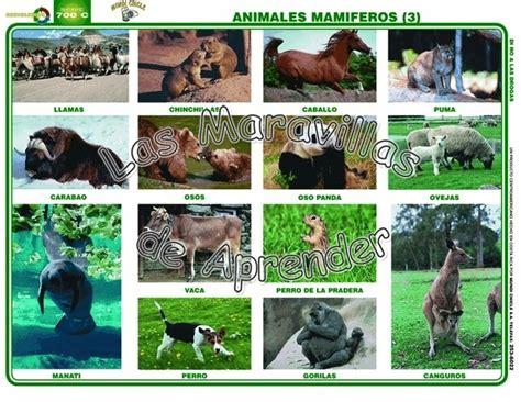 imagenes de animales vertebrados mamiferos animales vertebrados