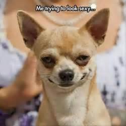 Funny Dog Face Meme - best 25 funny dog pictures ideas on pinterest funny dog