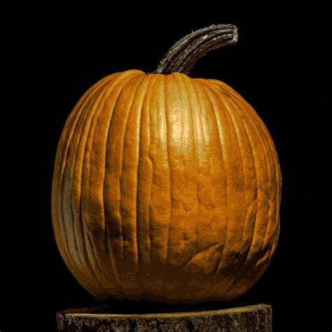 pumpkin gif o lantern pumpkin gif find on giphy