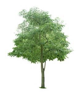 define tree tree 743 trees landscape scenery