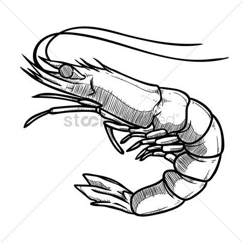 prawn vector image 1937503 stockunlimited