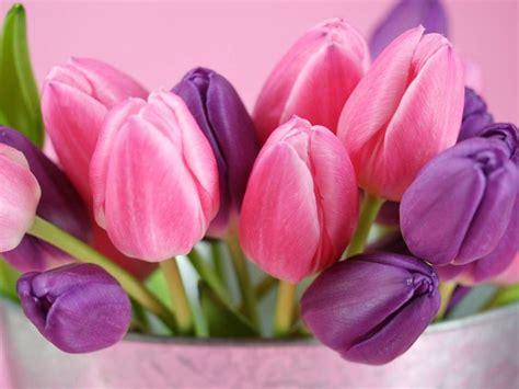 fiori significato significato fiori rosa linguaggio dei fiori