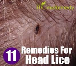 lice home treatment 11 home remedies for lice treatments cure