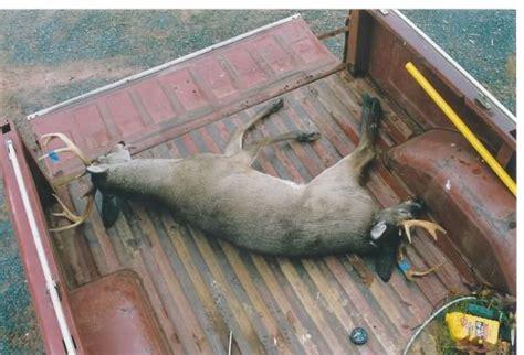 buck two two headed buck