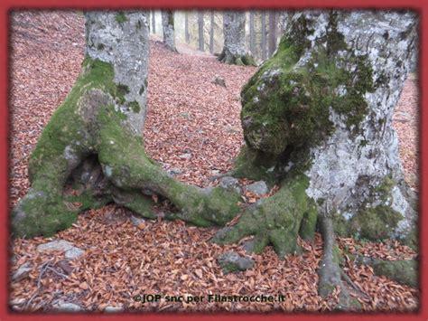 amici un testo alberi amici un testo per la festa degli alberi in
