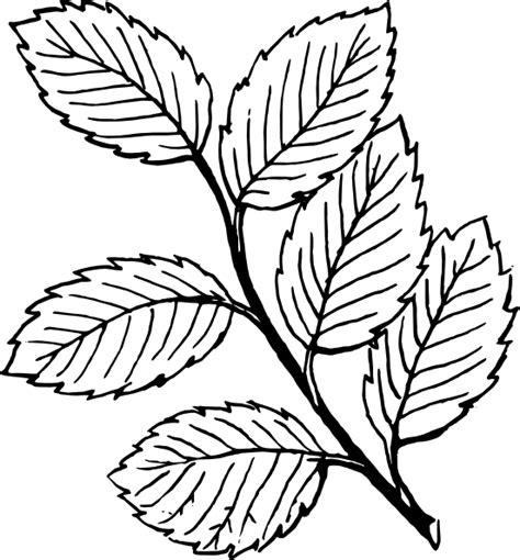 Mint Leaf Coloring Page | mint leaves clip art at clker com vector clip art online