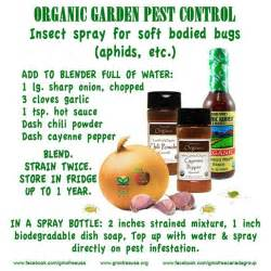 Natural Bug Spray For Plants Insect Spray Diy Pinterest