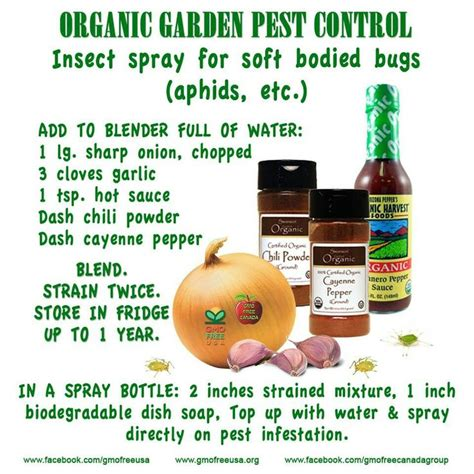 backyard pest control insect spray diy pinterest