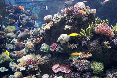 noaa   plan  protect  oceans  troubling noise pollution