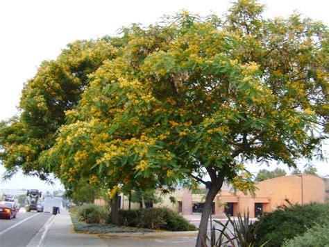 tree photos tree photos itmssandiego itmssandiego