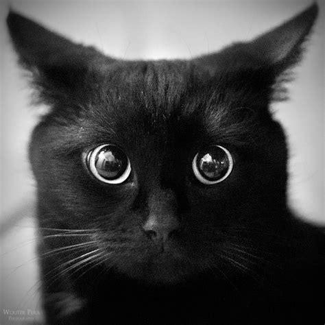 black cat black cat 可愛い黒猫たちの画像集 naver まとめ