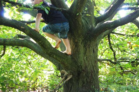 climbing tree what your teach you about if you re willing to hear it huffpost