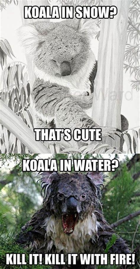 Angry Koala Meme - koala meme funny pictures quotes memes jokes