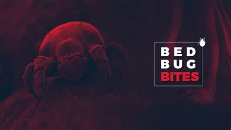 bed bug exterminator near me cheap bed bug exterminator 28 images best methods for bed bug pest