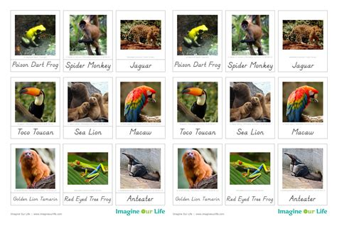 printable rainforest animal cards south american animals list