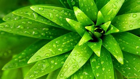 beautiful green color nature hd wallpaper